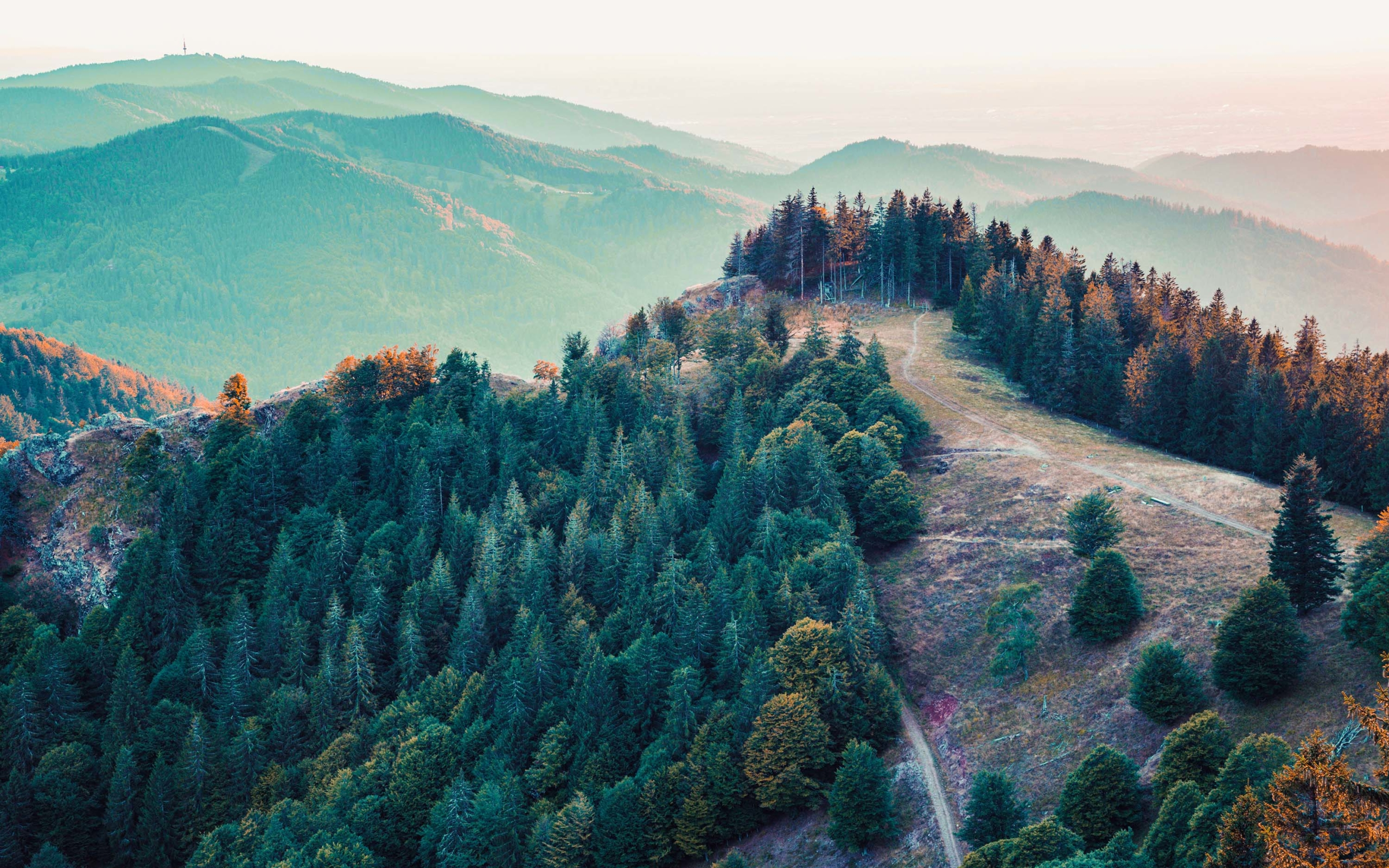 Wallpaper of Mountain, Trees, Nature, Earth background & HD image