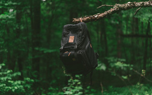 Смотреть обои Backpack, Branch, Forest, Travel