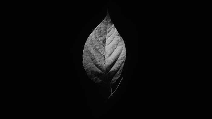 HD Wallpaper Leaf, Black and White