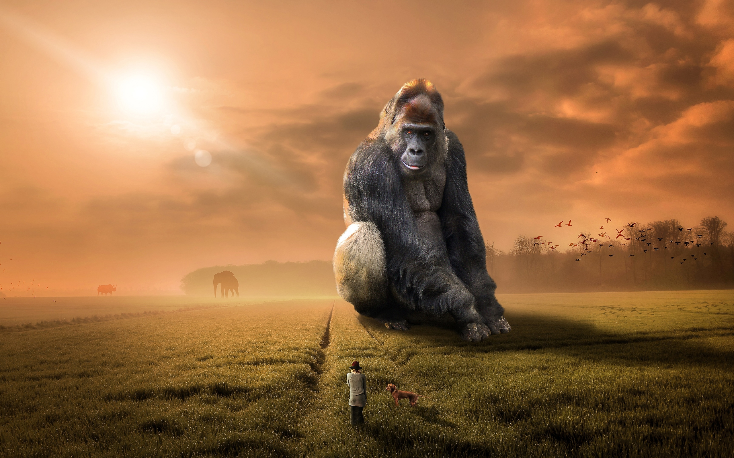 Wallpaper Of Animal Fantasy Gorilla People Background