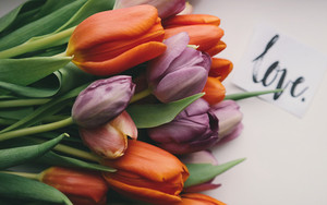 Preview wallpaper of flowers, tulips, orange, purple, love