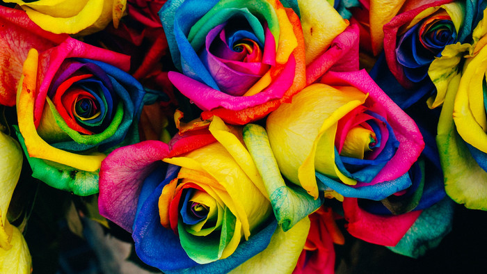 HD Wallpaper of Roses, Multicolored, Rainbow