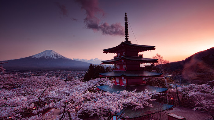 HD Wallpaper of Cherry Blossom, Japan, Spring