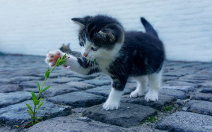 Preview wallpaper of Kitten, Flower, Cute, Baby