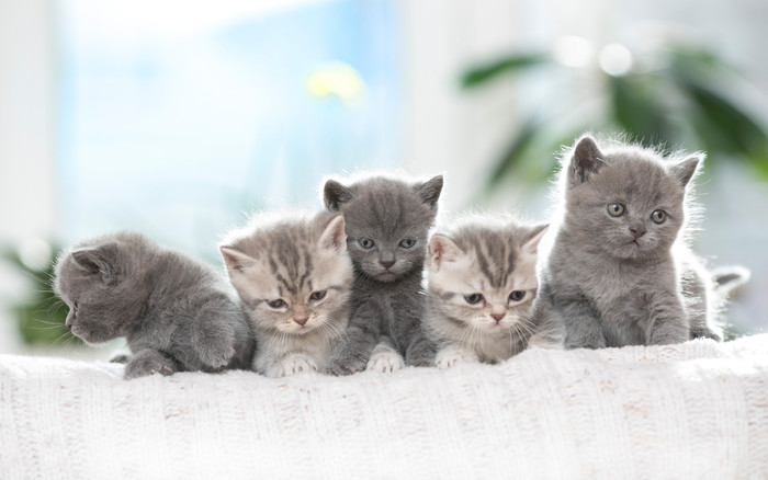 HD Wallpaper Baby Animal, Cat, Kitten, Pet