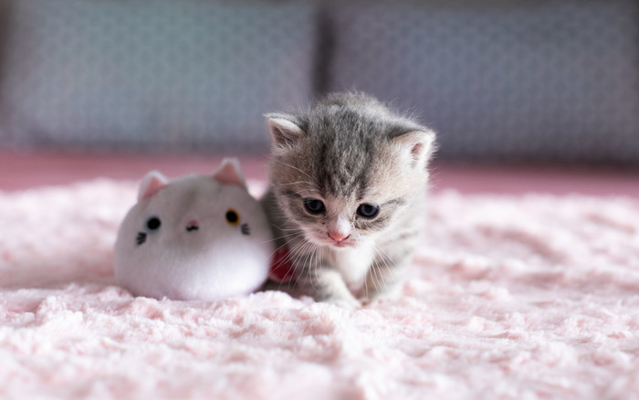 Wallpaper of Cat, Kitten, Baby, Animal background & HD image