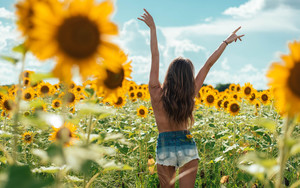 Preview wallpaper  Freedom, <b>Field</b>, Sunflowers
