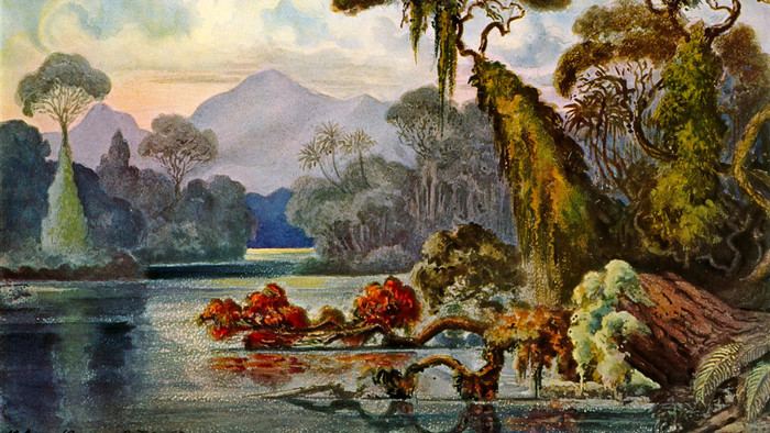 HD Wallpaper of Ernst Haeckel, Jungle, Lithography, Painting