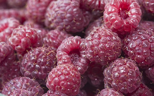 Смотреть обои Raspberries, Berries, Red, Ripe, Juicy
