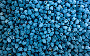 Preview wallpaper of blueberries, berries, blue