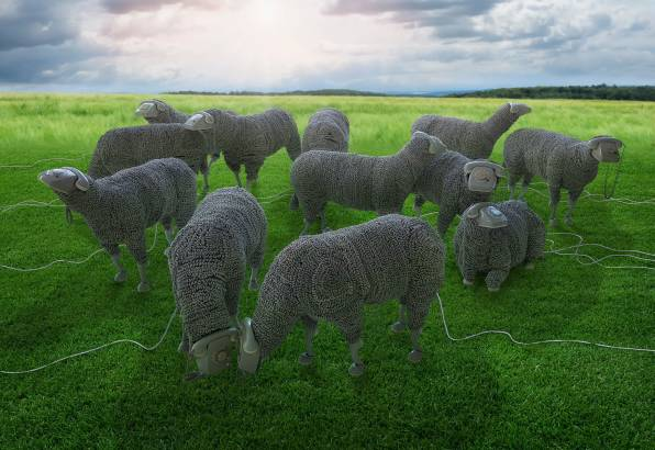 HD Wallpaper Phones, Wires, Sheep, Pasture